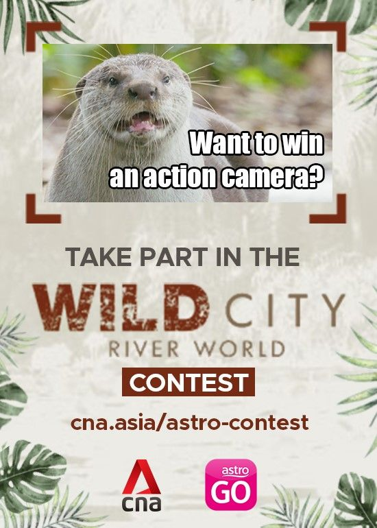cna-wild-city-river-world-winners-announcement